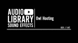 Owl Hooting - Sound Effect
