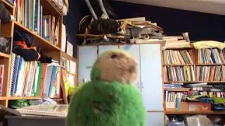 The Kakapo Dance