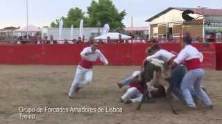 Grupo de Forcados Amadores de Lisboa - Treino