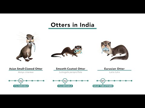The 'Otter' Side of Conservation