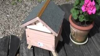 Positioning a live bumblebee colony and lodge in your garden