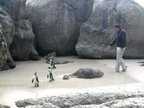 Grandpa and the penguins