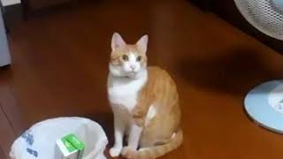 メタルギアソリッドの「!」の音に毎回反応する猫が可愛すぎるwww【twitterで話題】