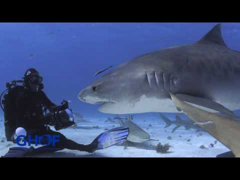 This is Your Ocean: Sharks - Part 2    Preview