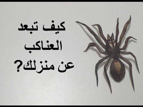 كيف تتخلص من العناكب ?
