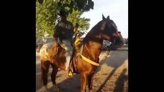 Jose Robles El Guacho - Tratando de Montar A Caballo En Mi Rancho