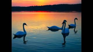 O Lago dos Cisnes  - Tchaikovsky