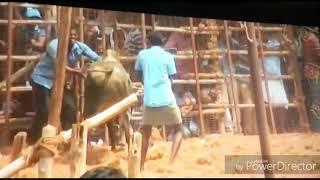 Thiruppathur_ mithran best_ performing in_ jallikattu 2017_