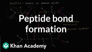 Peptide bond formation | Macromolecules | Biology | Khan Academy width=