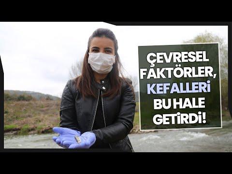 Kefal Balıklarının Kas Dokuları, Çevresel Faktörlerin Gazabına Uğradı