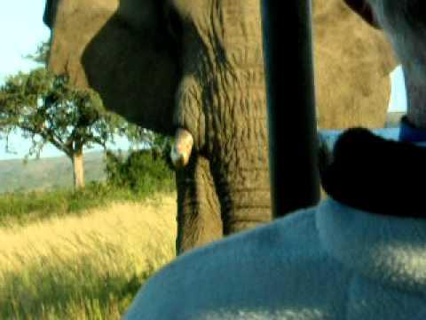 Cranky Elephant