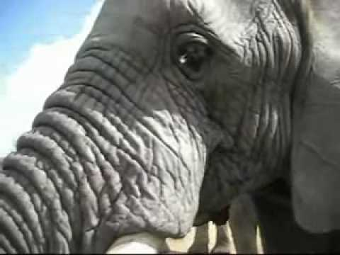 Elephant Encounter at Addo Elephant Back Safaris.wmv