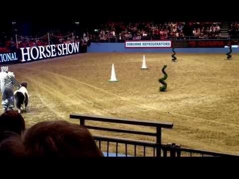London Olympia Horse Show 2014 Shetland Pony