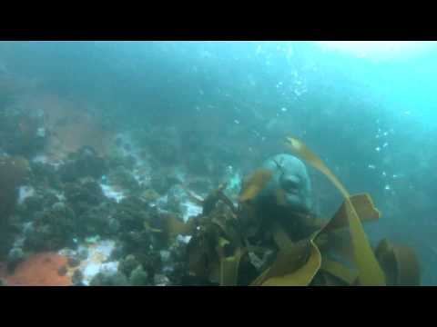 Sharkaholic Expedition South Africa Apr2012.mp4