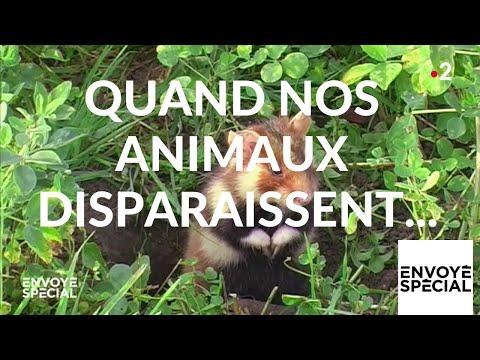 nouvel ordre mondial | Envoyé spécial. Quand nos animaux disparaissent... - 14 février 2019 (France 2)