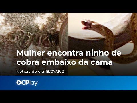 Mulher encontra ninho de cobra embaixo da cama