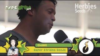 Herbie Interviews Super Strains Seeds
