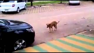 video cachorrinho dancando zapzap