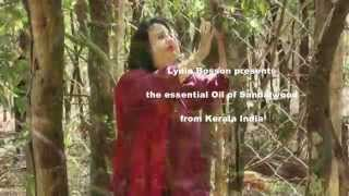 Aromatherapy - Sandalwood Essential Oil - Lydia Bosson