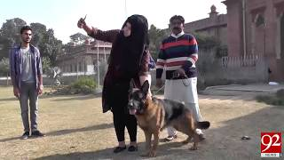 Beautiful German shepherd show held in Faisalabad - 07 January 2018- 92NewsHDPlus