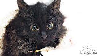 LIVE: Pregnant sister feral cats + kittens - TinyKittens.com width=