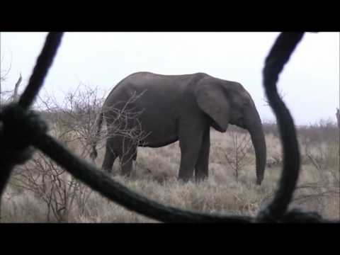 South Africa Video #3
