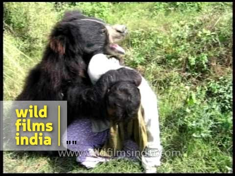 Sloth Bear plays with its handler in Assam
