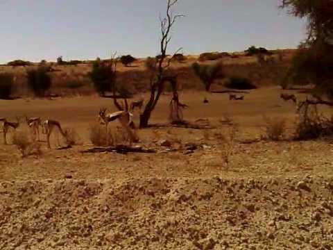 Kgalagadi Transfrontier Park , Sudafrica – Part 3.