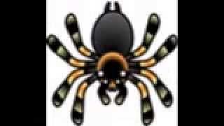 Tarantulas song by Eugene Yackle