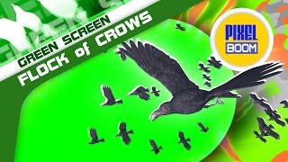 Green Screen Flock of Crows Animals Birds - Footage PixelBoom