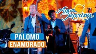 Agua Marina - Palomo Enamorado (En Vivo)