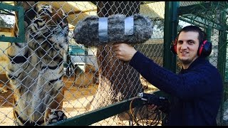 "Ivan Markovic Recording in ""Luján Zoo"" 