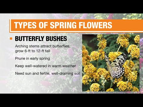 Types of Spring Flowers