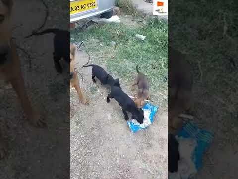 dog feeding in karnataka