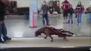 Pitbull Impossible Power