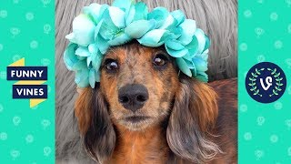 TRY NOT TO LAUGH - Cutest & Funniest Animals of the Week!