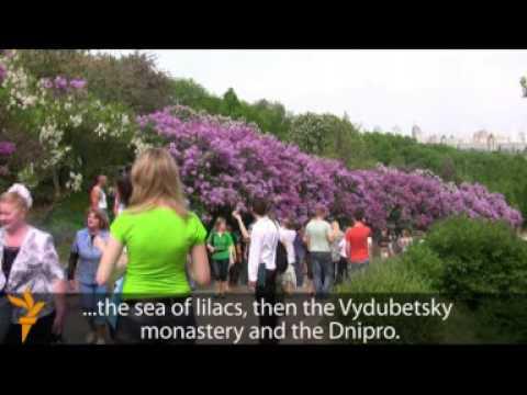 Lilac Season In Ukraine
