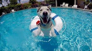 Gohan LOVES the Pool!