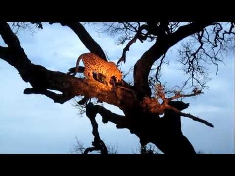 Jessie's Journeys – South Africa – Leopard