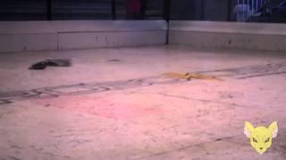 WCX - Cachorro Louco vs Tico e Teco