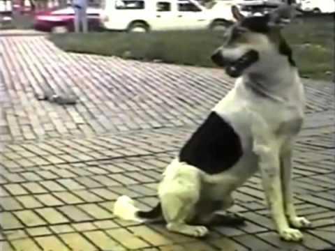 bajo-tierra-el-pobre-video-original-hq-leillopillo