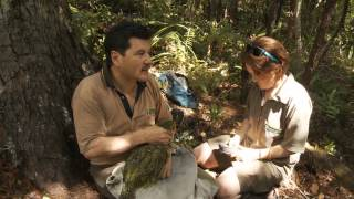 About kakapo: Uncovering Waa after her capture