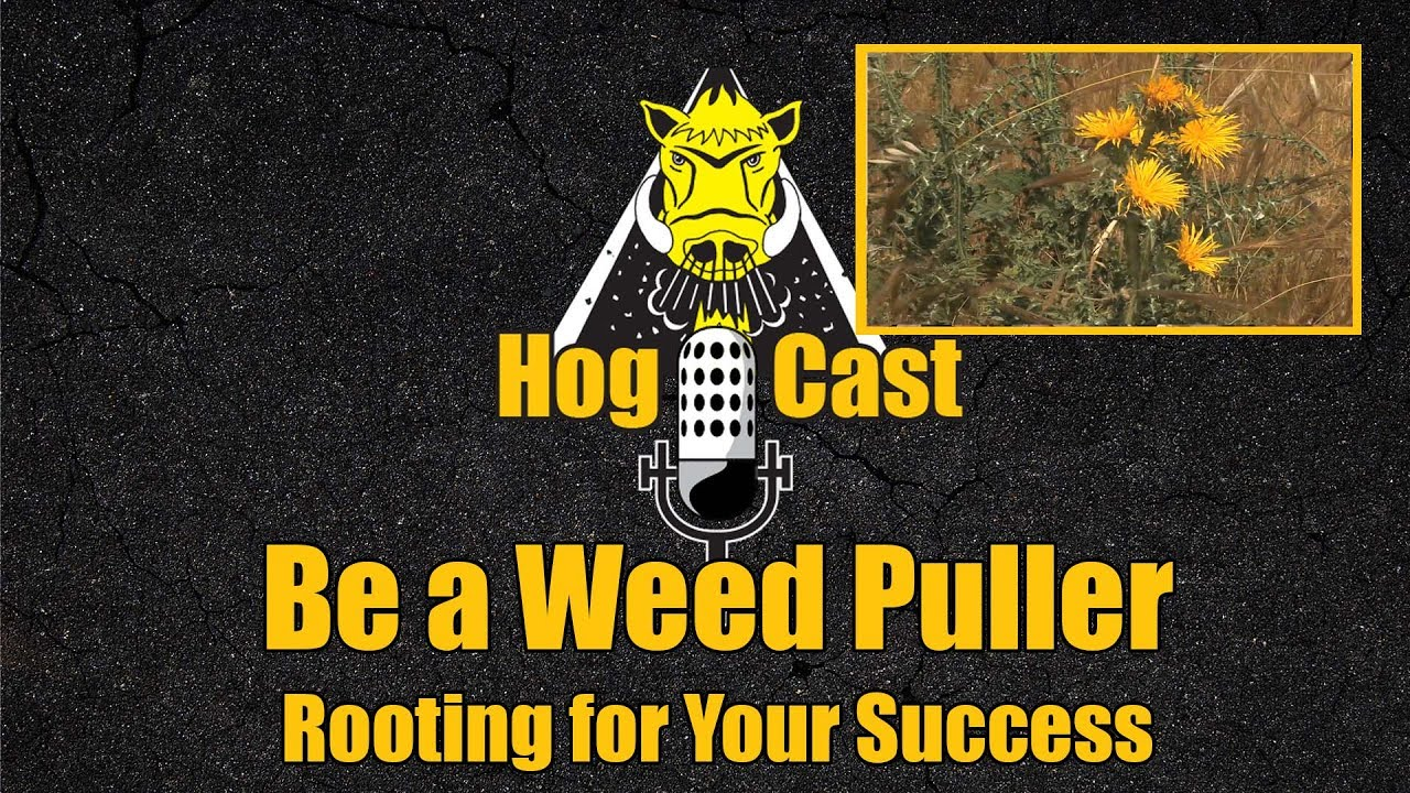 Hog Cast - Be a Weed Puller