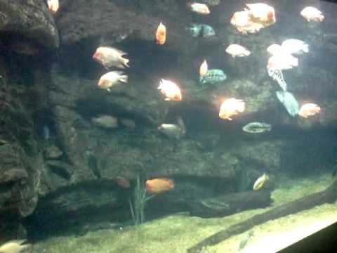 Lake Nicaragua Exhibit At the Tennessee Aquarium