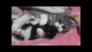 子猫を2匹、同時に抱きしめる母猫