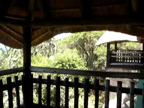 Tree House at the Crocodile Park, Amzimtoti, South Africa