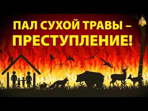 Останови огонь! Пал сухой травы преступление!