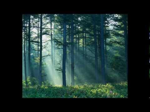 rufus-wainwright-gay-messiah-spectaclereplication