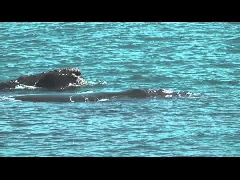 Land-Based Whale Waching South Africa – Whale Watching in Gansbaai