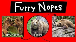 Furry Nopes, Grizlords, & Murder Carpets